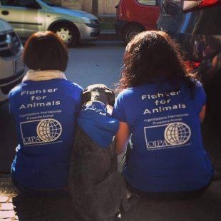 Più aree cani a Palermo e un Regolamento per i diritti degli animali