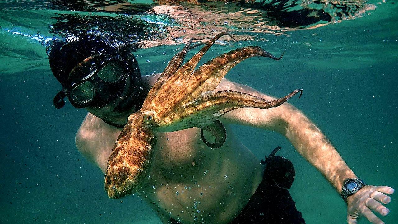 """""""Il mio amico in fondo al mare"""", ha vinto un Oscar"""