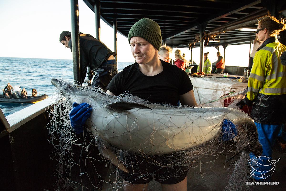 Pesca sostenibile: una Contraddizione?