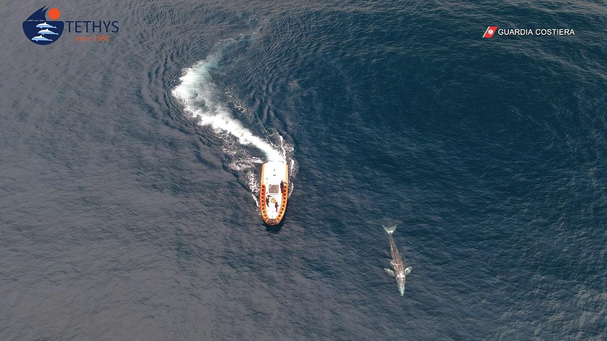 Non Disturbate Wally, la Balena Grigia !