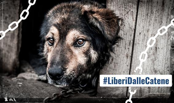Firma anche tu la Petizione per chiedere Multe Severe per chi lascia il cane a Catena