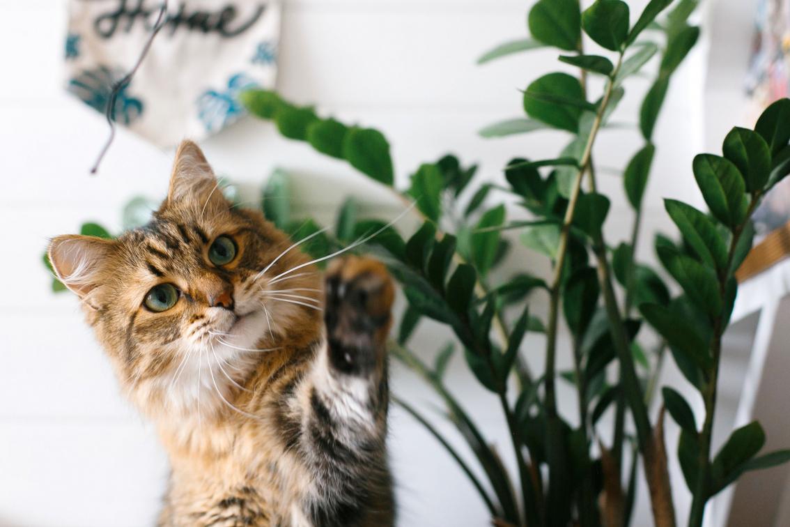 Come tenere a bada i Gatti dalle piante in casa