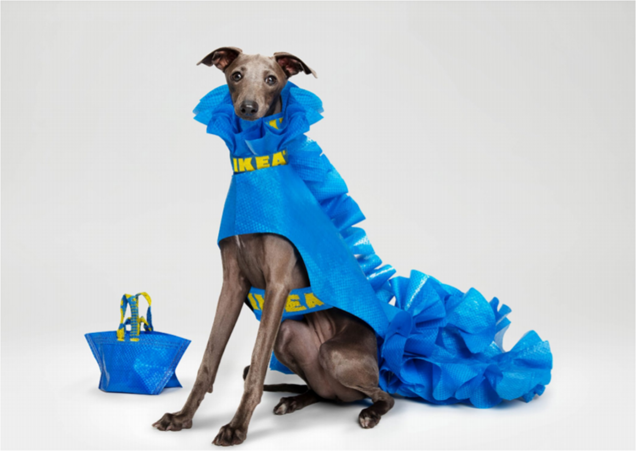 Modificare borse iconiche Ikea in impermeabili per cani