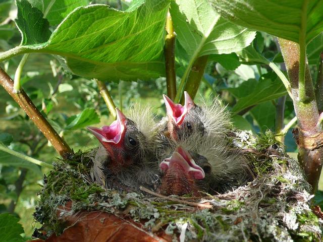 A Roma, L'Oipa chiede di fermare le potature e abbattimenti in piena stagione di nidificazione