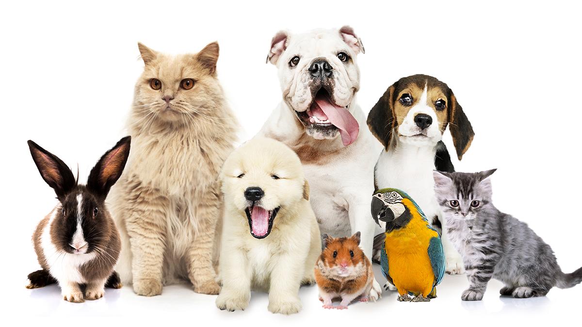 Finalmente in vigore il Decreto che consente al Veterinario di Prescrivere Farmaci Umani per i nostri Animali