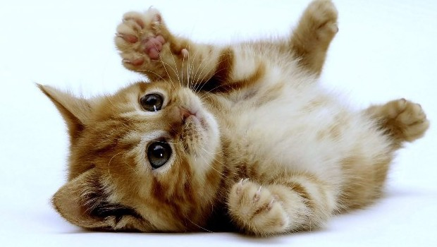 5 cose che odiano i gatti?