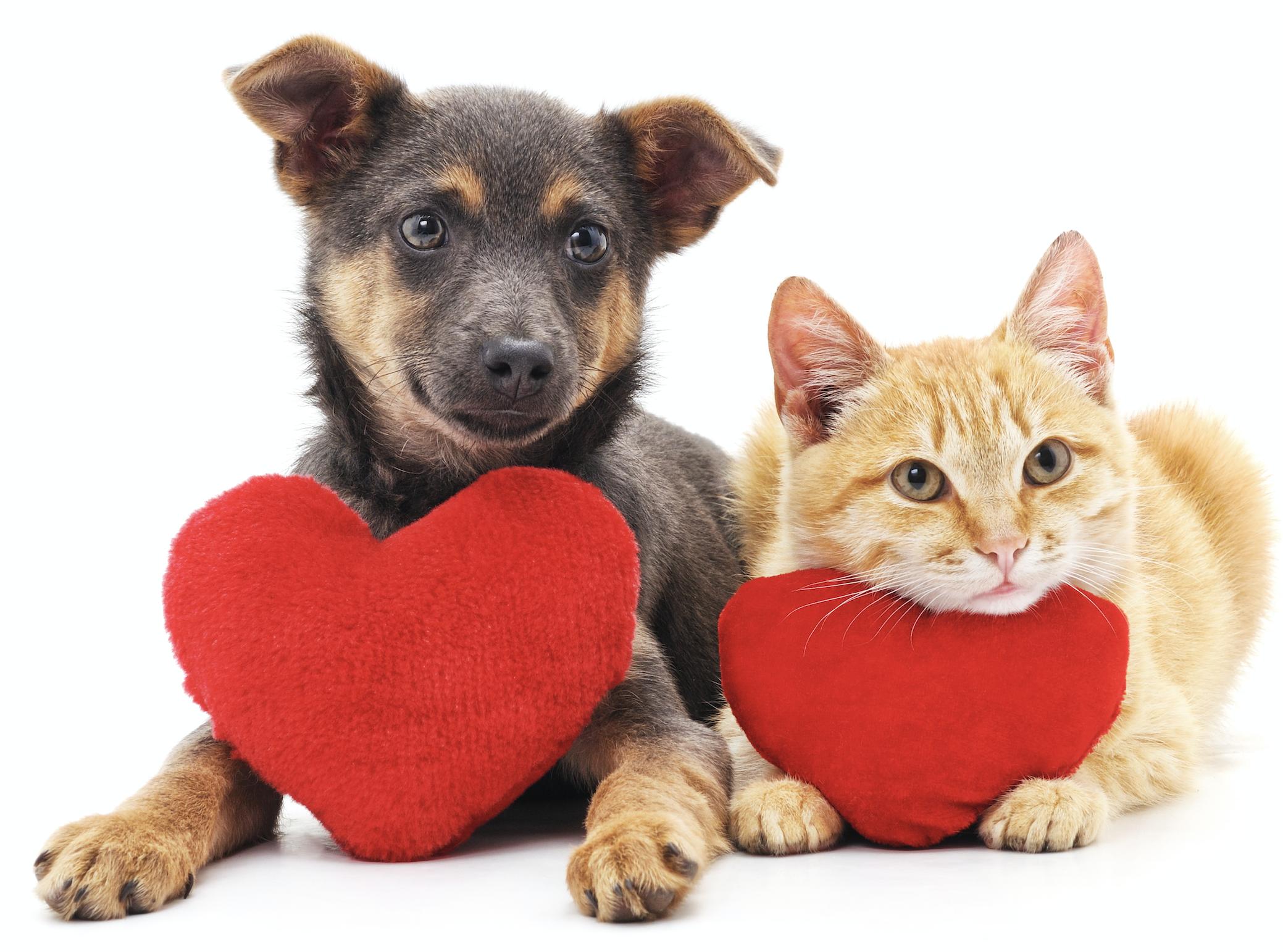 Ripartenza Post Lockdown, cauta per cani e gatti