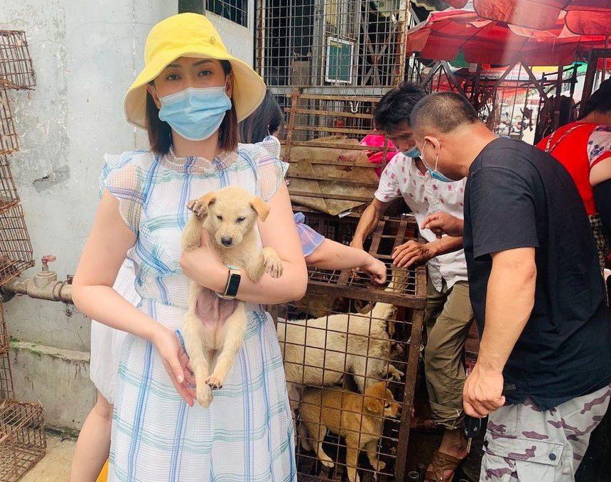 Riparte il Festival di Yulin in Cina: il massacro per la carne di cane