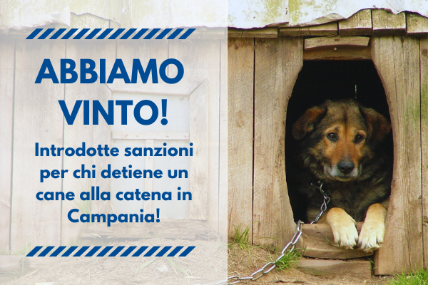Anche in Campania sanzioni per chi detiene un cane alla catena!