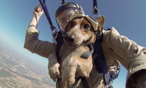 Nuovo paracadute per i cani