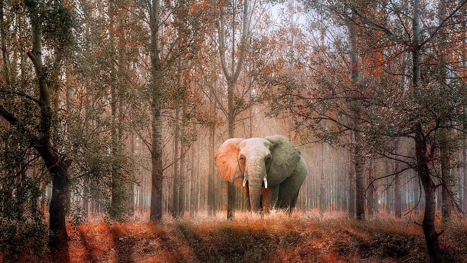 12 agosto: Giornata mondiale degli elefanti