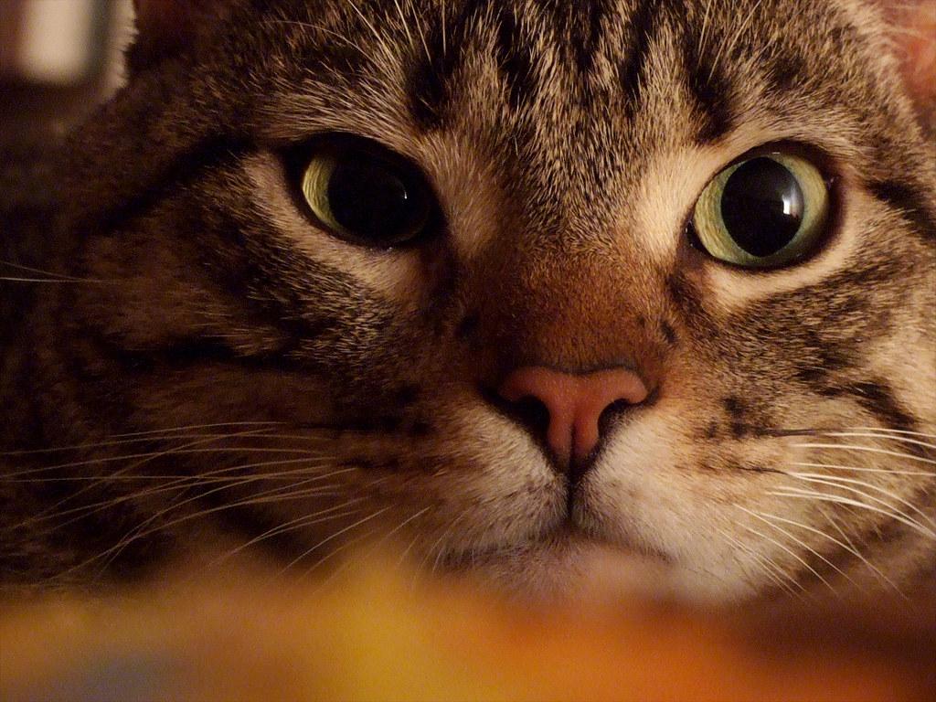 8 agosto: Giornata mondiale del gatto