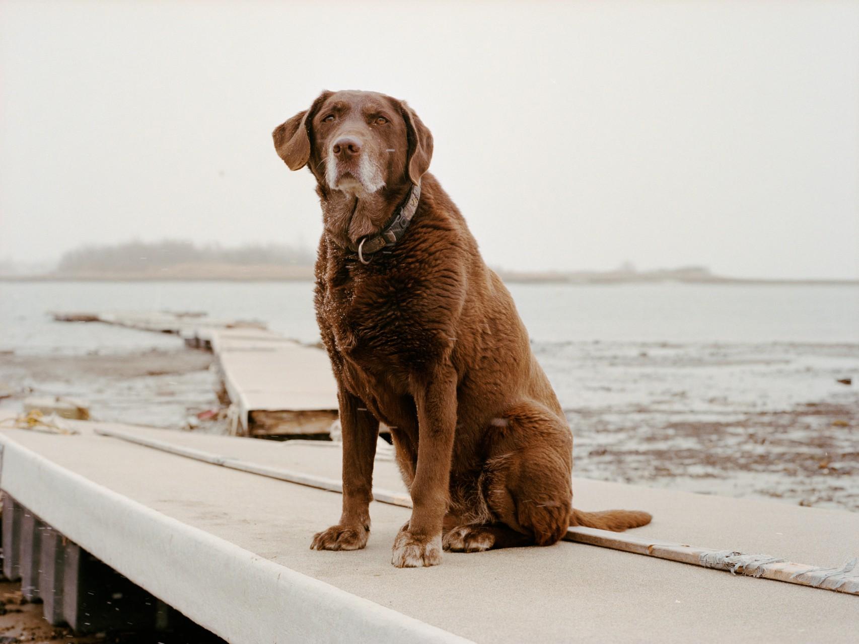 New York omaggia i Cani Eroi con 2 Mostre