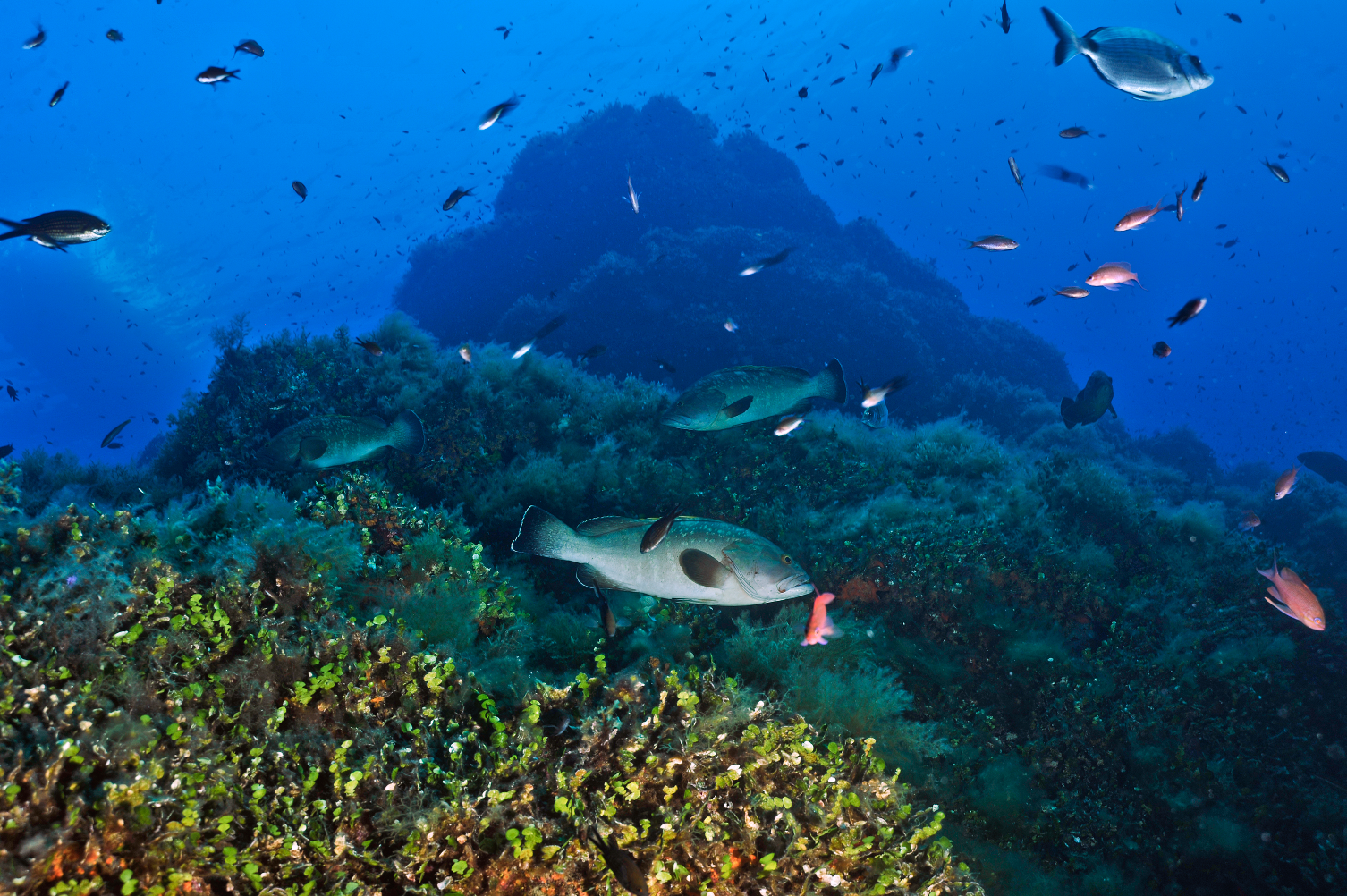 Oceani; una guida globale per proteggerli