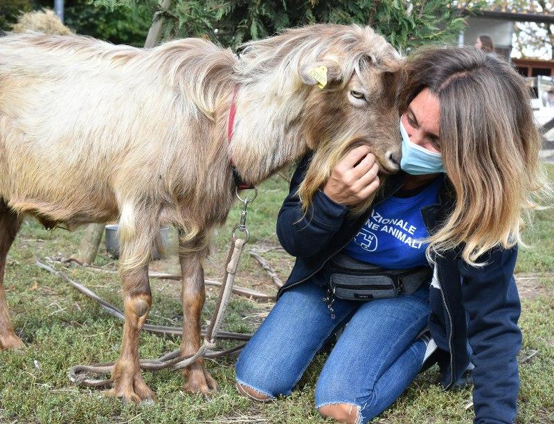 Sabato 2 e domenica 3 ottobre ENPA festeggia le Giornate degli Animali
